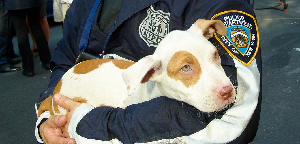 ASPCA Provides Animal Cruelty Investigations Training for NYPD