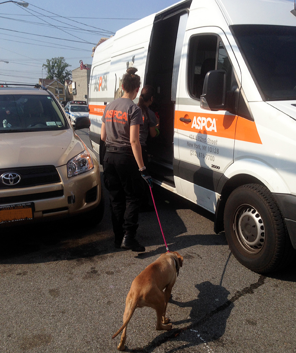 ASPCA Rescues 20 Dogs in NYPD Dog Fighting Bust