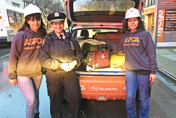 UPDATE: ASPCA Reunites Pet Parents with Missing Cats Following East Village Explosion and Fire