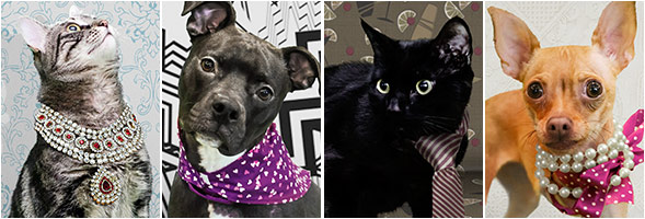ASPCA Teams Up with OkCupid to Help Homeless Pets Find True Love