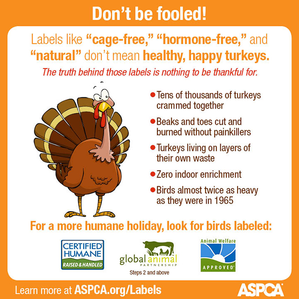 This Thanksgiving, Don't be Fooled by Misleading Food Labels
