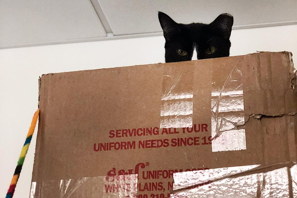 Aubrey in box