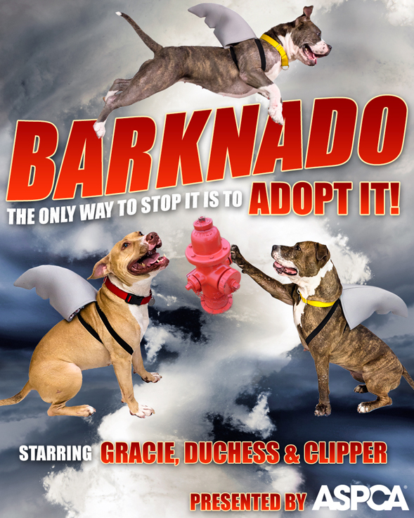 Barknado Takes Country By Storm