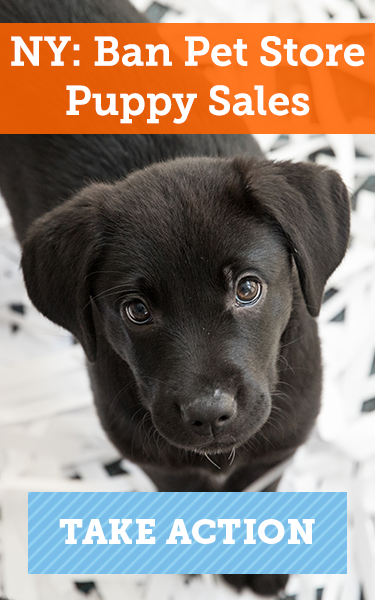 NY: Ban Pet Store Puppy Sales