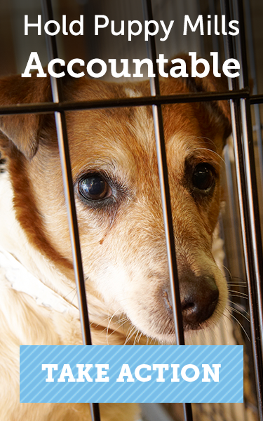 Hold Puppy Mills Accountable