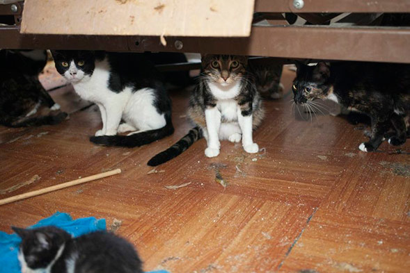 several cats hiding under furniture