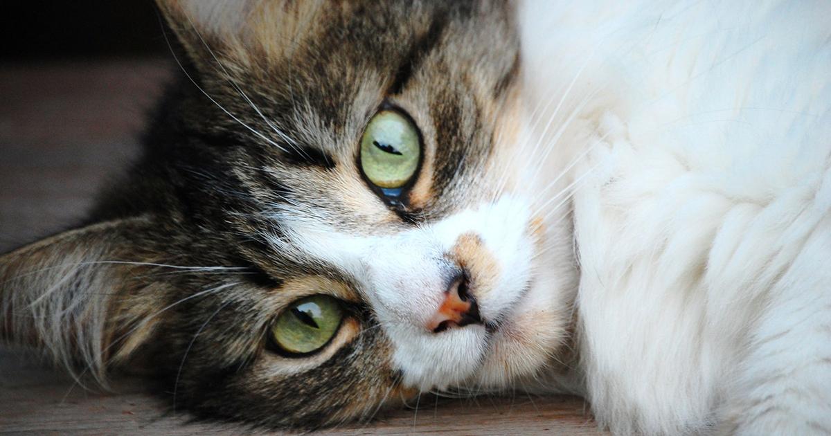 Older Cats With Behavior Problems Aspca