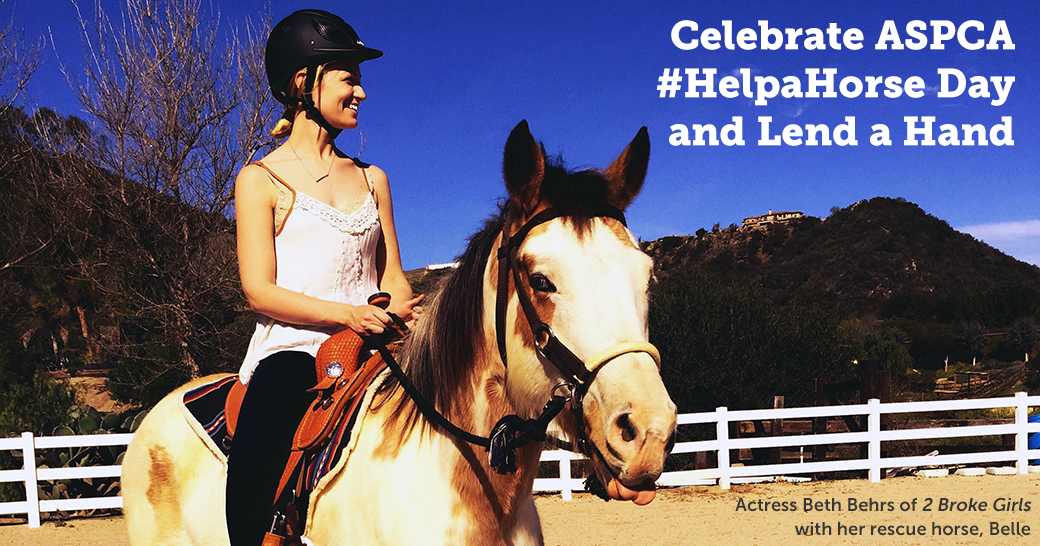 Celebrate ASPCA #HelpaHorse Day and Lend a Hand