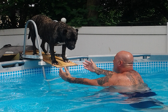 Dog standing on diving board looking at man in pool