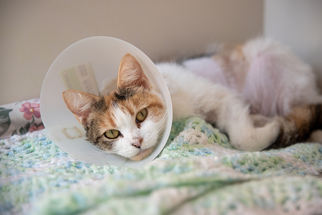 a cat with a neck cone