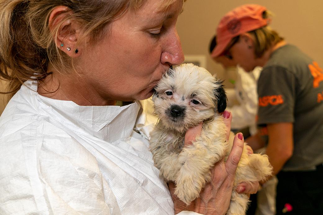 volunteer kissing a puppy