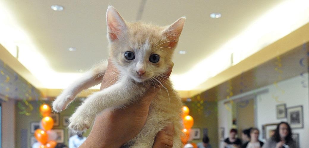 ASPCA Kitten Nursery Celebrates 1,000th Kitten