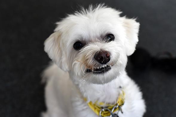 ASPCA Happy Tail: Oscar Beats the Odds