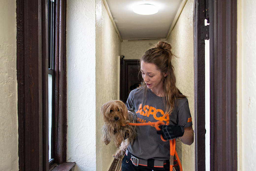 ASPCA responder carrying rescued dog out of the apartment