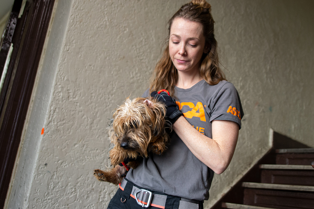ASPCA responder carrying rescued dog down stairs