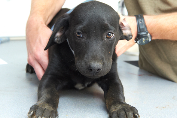 Aspca Rescues Dozens Of Dogs In Federal Dog Fighting Bust