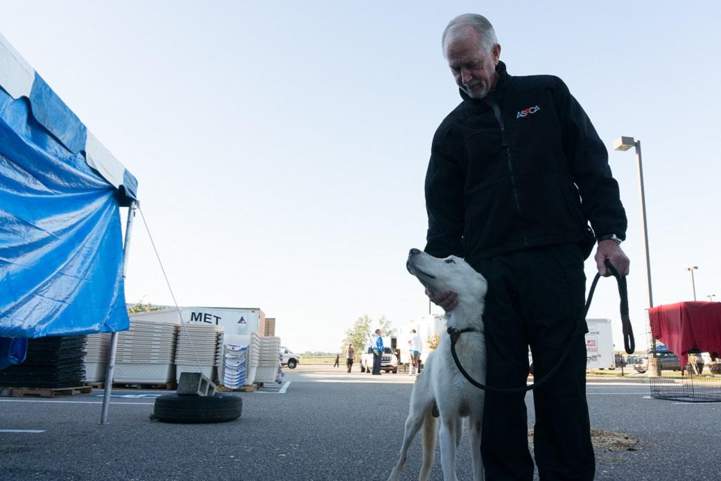 Dick Green taking rescued white shepherd for a walk