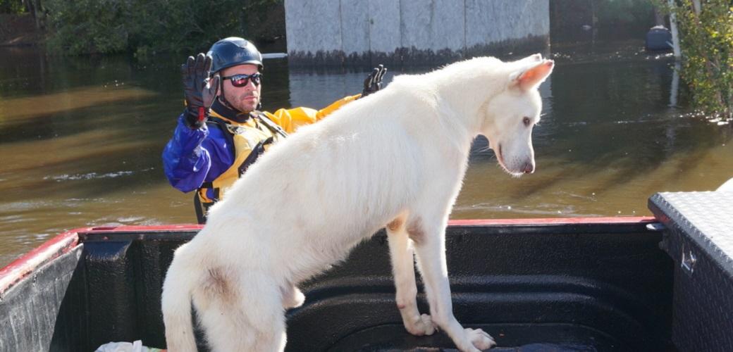 responder rescuing a dog