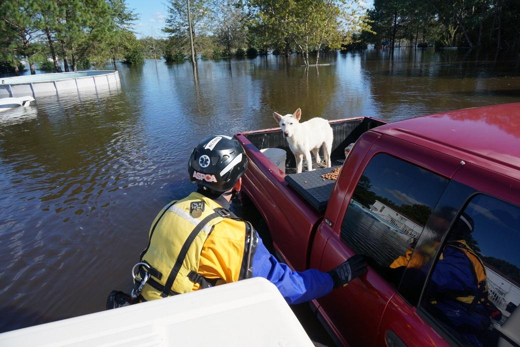 Dog stranded in pick up truck
