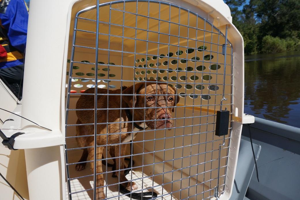 rescued dog in a crate