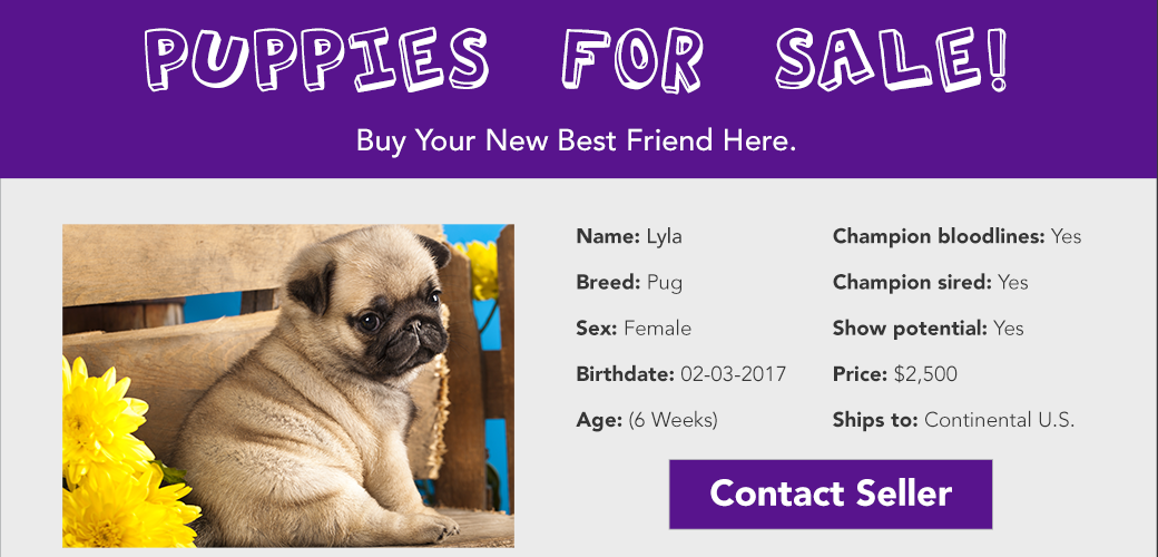 Online puppy shopping