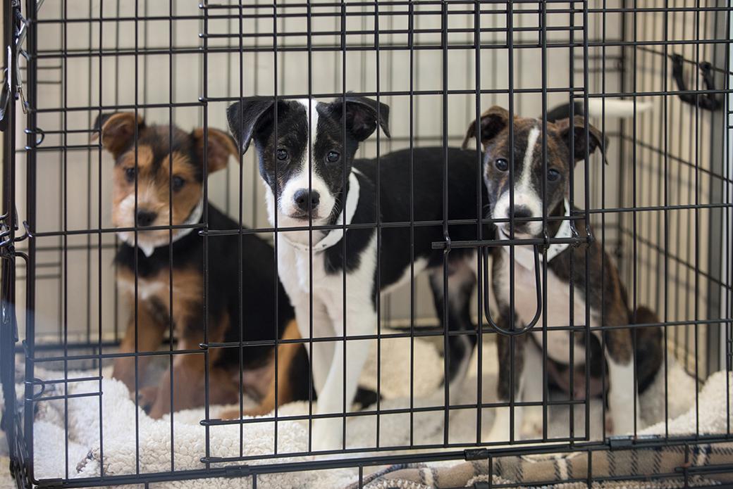 Reino Unido anuncia proibição da venda de cães e gatos em pet shops