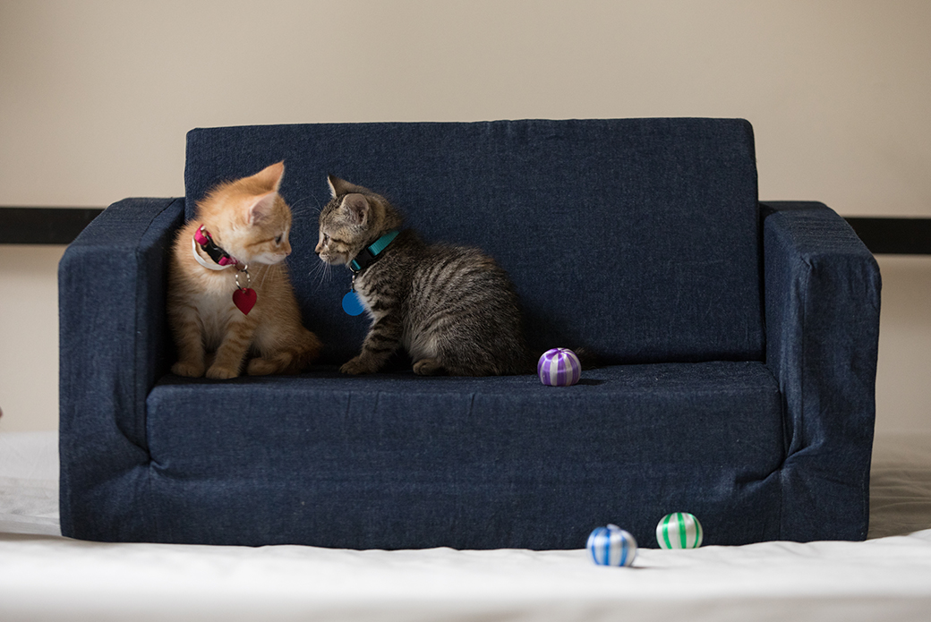 two kittens on a on couch