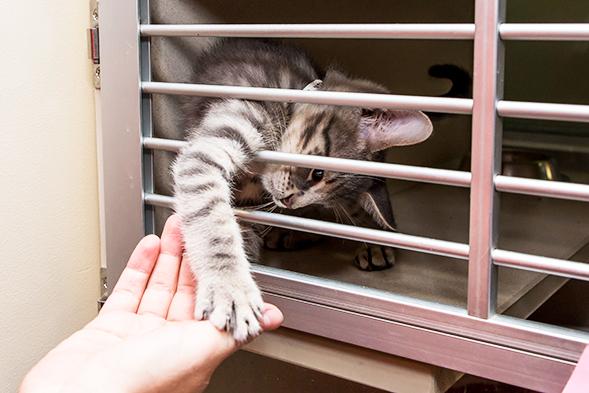 Cause for Celebration: ASPCA Kitten Nursery Cares for its 1,000th Kitten