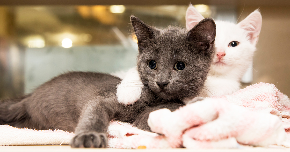 Cause For Celebration Aspca Kitten Nursery Cares For Its