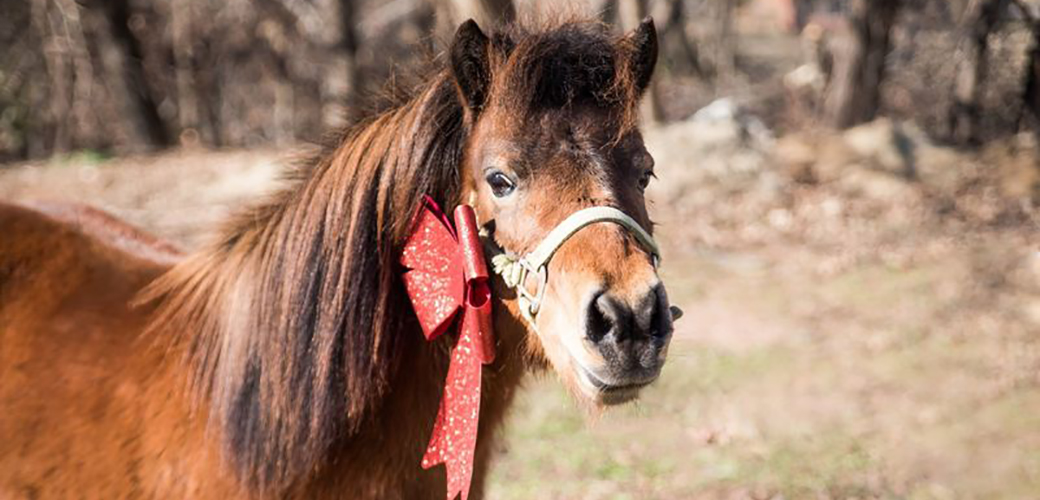 Gage the pony with a holiday bow