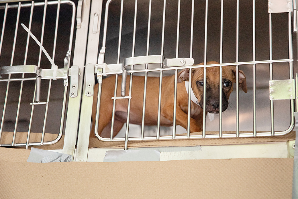 a puppy in a crate