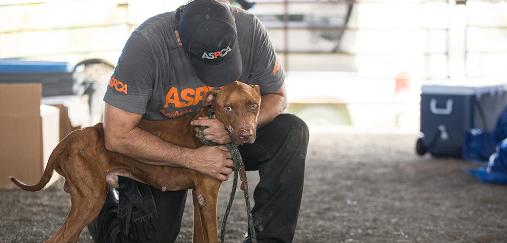 a rescued dog and responder