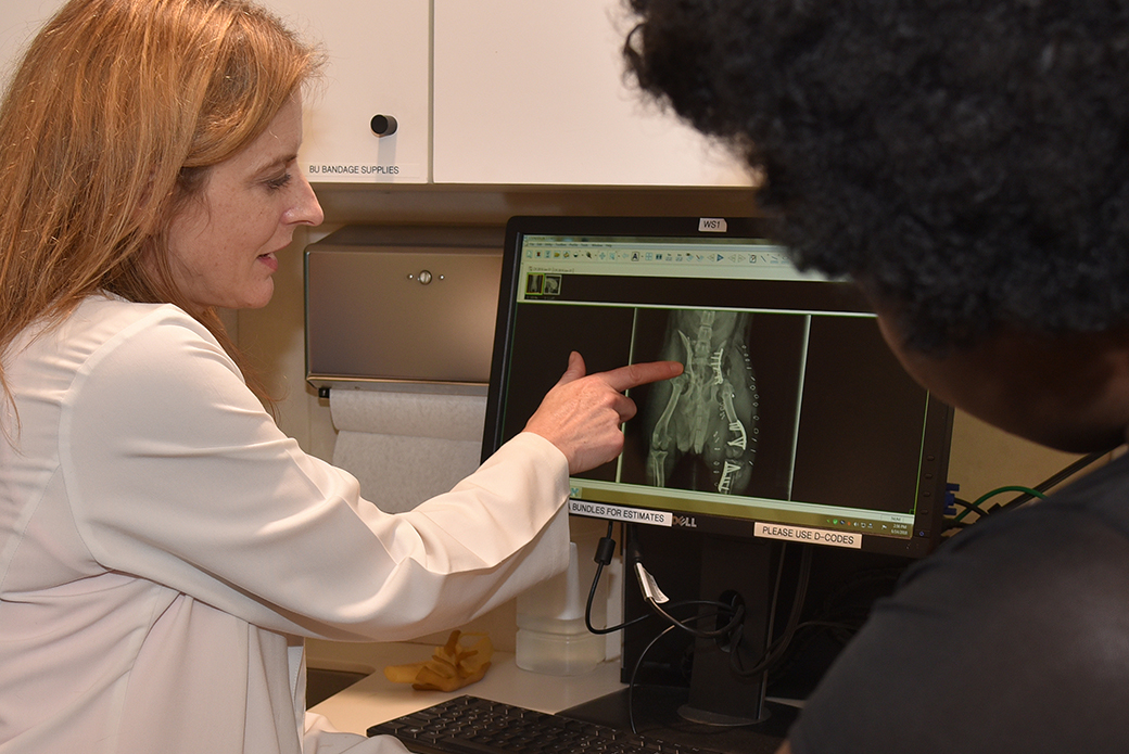 Dr. Gayle with Bella's x-ray
