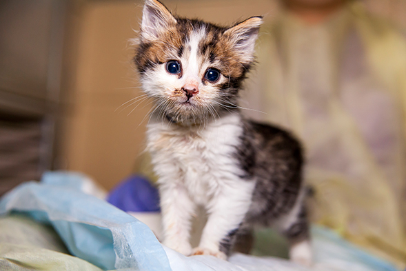 adopt a kitten or two with discounted fees during the