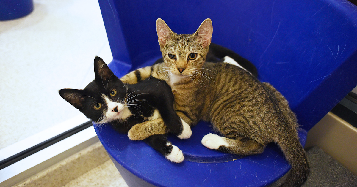 Adopt A Kitten In New York City