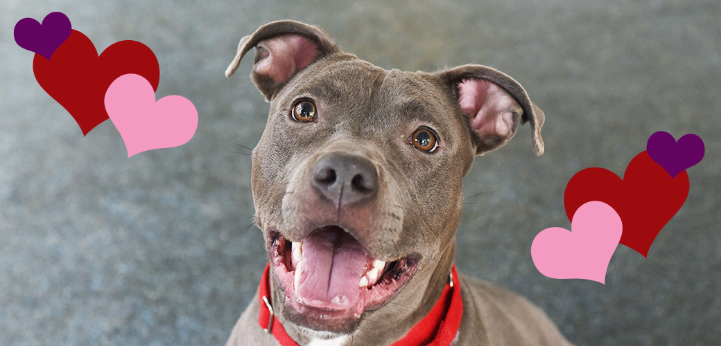 Adoptable pets are looking for love this valentine s day - Valentines day pictures with puppies ...