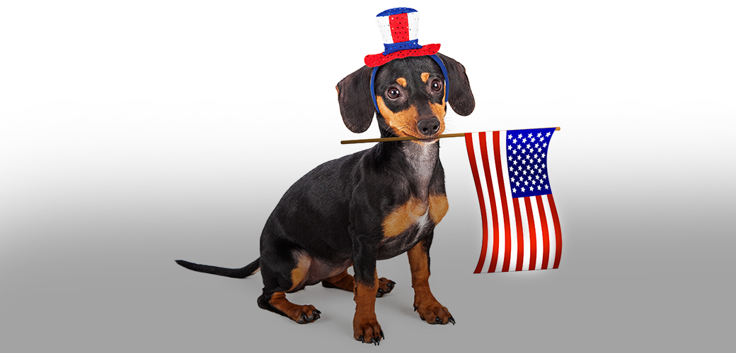 dog with an american flag