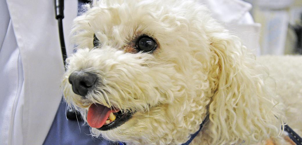 ASPCA Surgeons Help Bootsy Heal