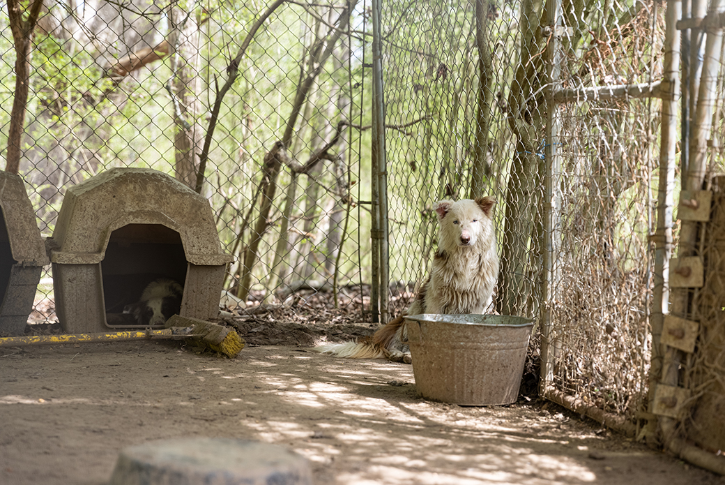 two dogs held in a dirty kennel