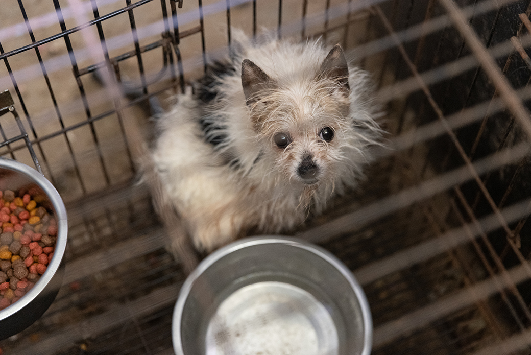 a small dog in a crate