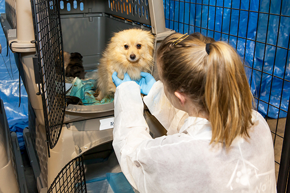 team member helping dog in crate