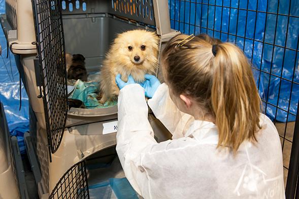team member helping dog in crate