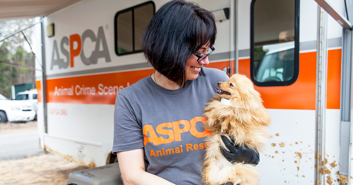 Adoption Agencies For Dogs Nyc