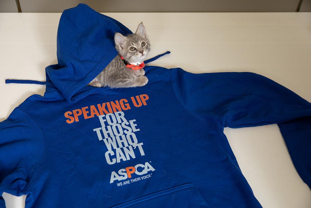 kitten in a blue aspca hoodie