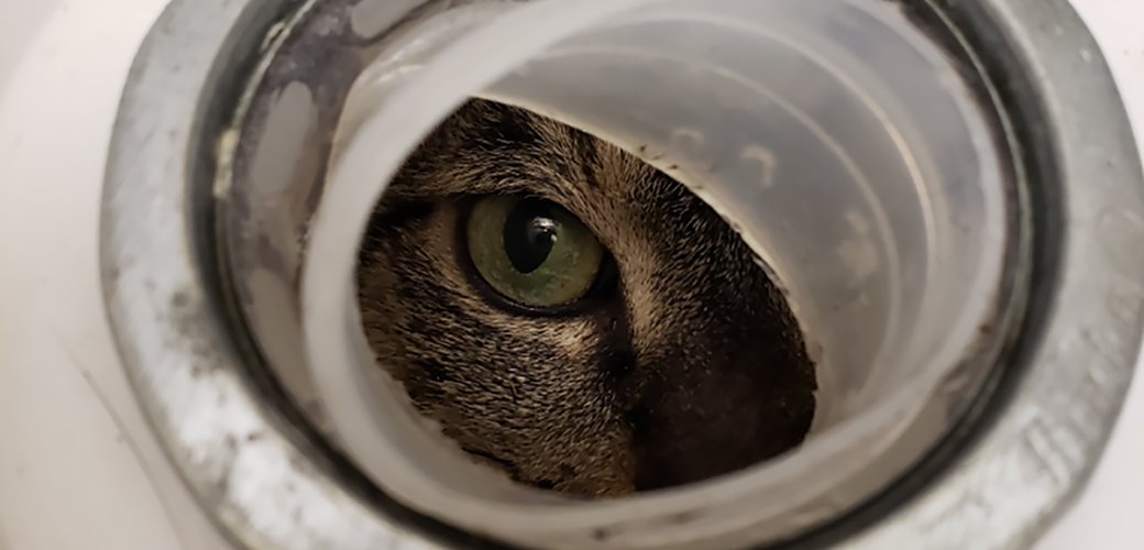 cat in a bucket