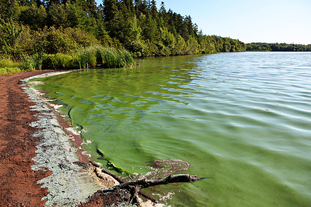 Animal Poison Control Alert: The Dangers of Blue-Green Algae