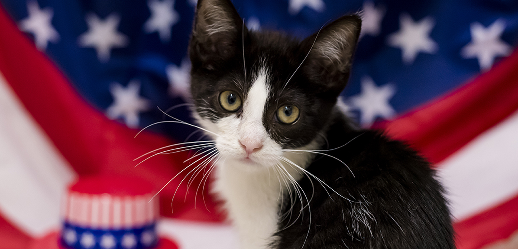 a cat in front of an american flag