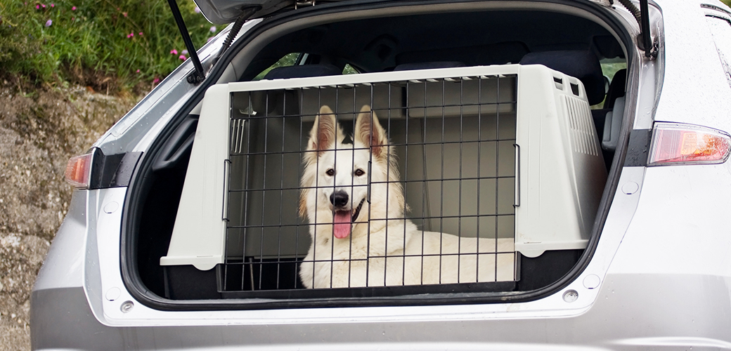 Car Tips for Pet Passengers