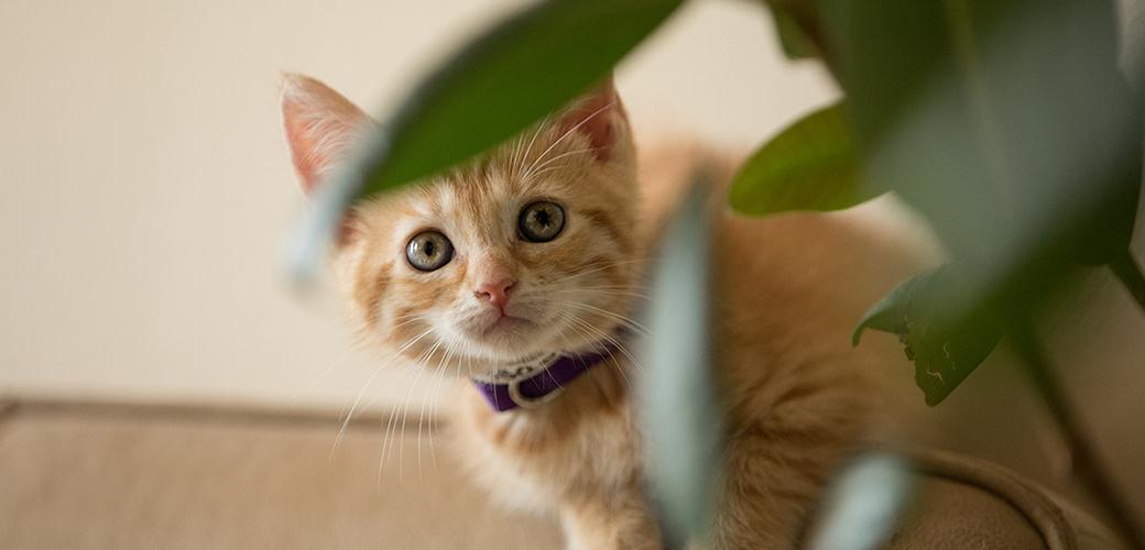 a kitten hiding behind a plant
