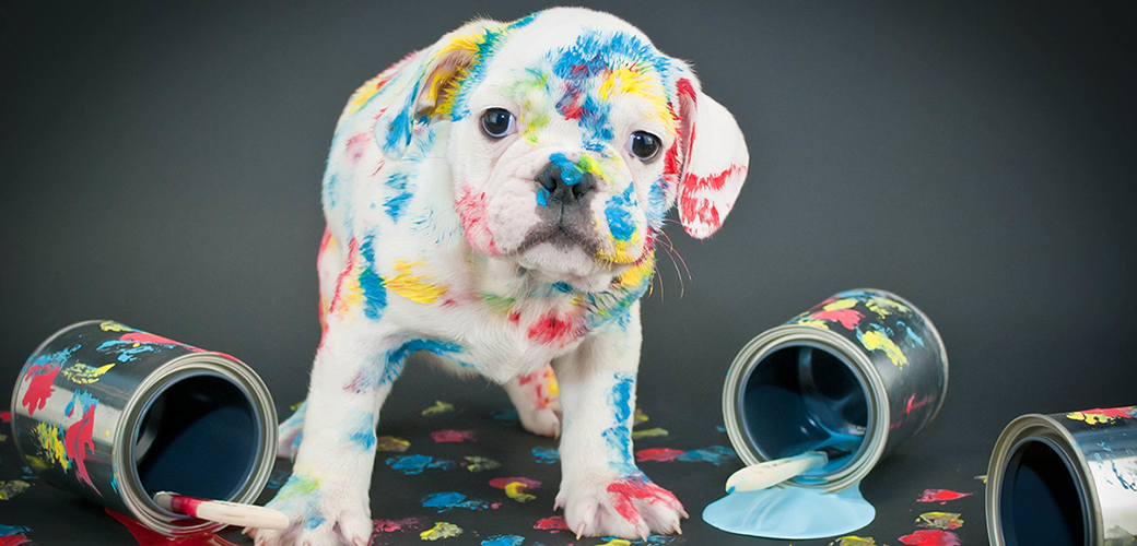a dog covered in paint